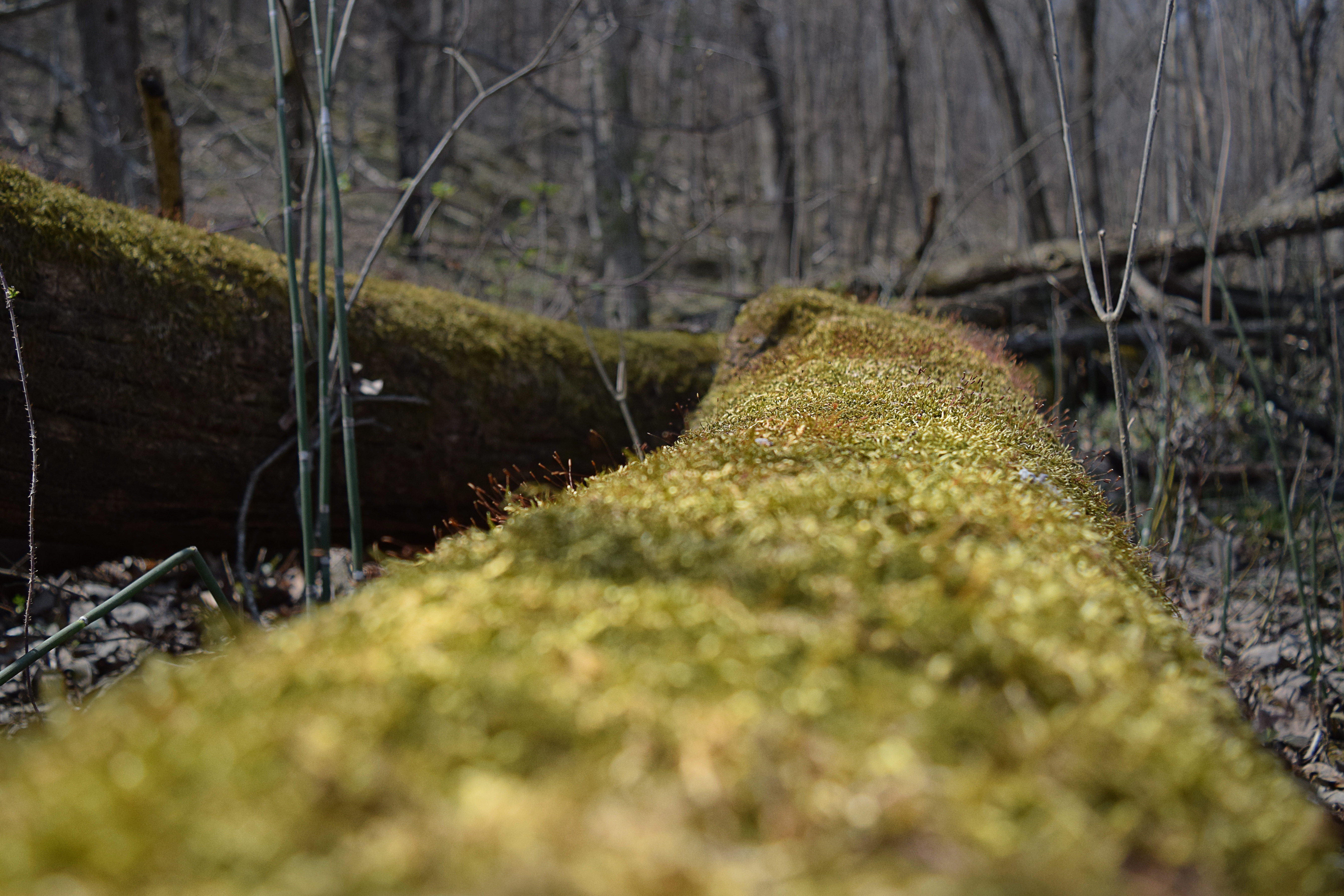 Photo Time: The Mossy Log