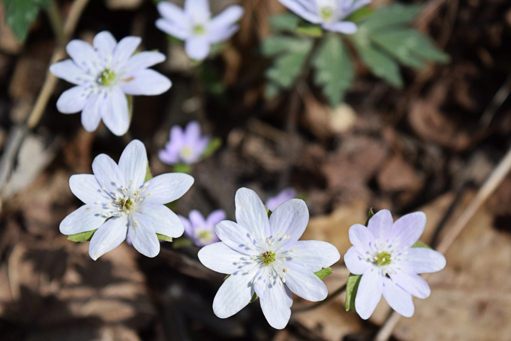 Flower2_Whitewater