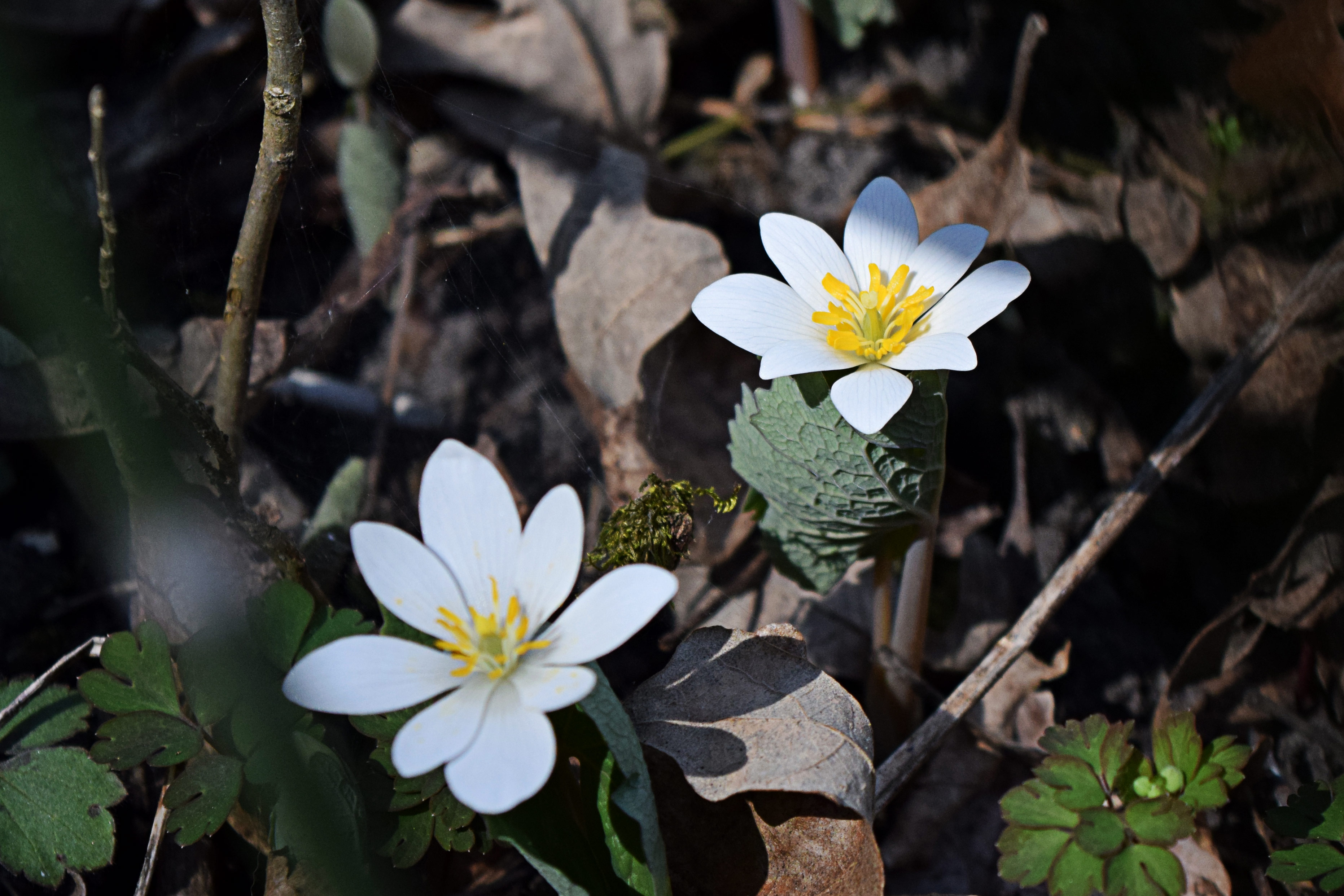 Nature Photo Friday: Some Kinda Flowers