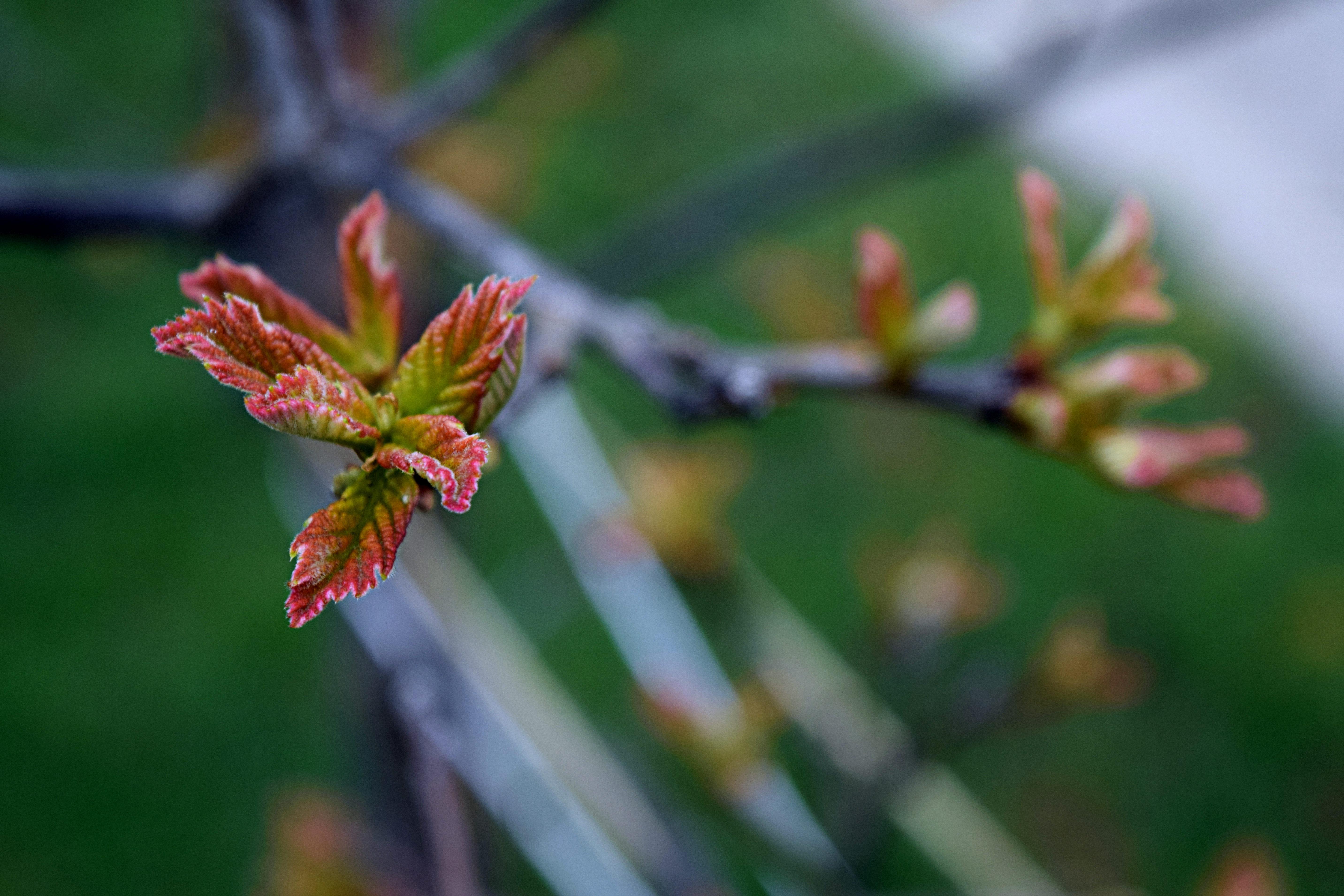 Photo Time: Scarlet Oak