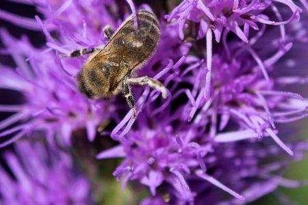 Macro Monday: Bees in Helsinki