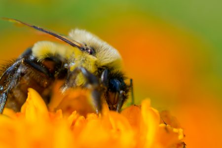 Macro Monday: Fuzzy Bee With Dust