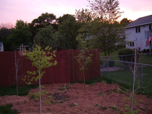 Tony's New Trees